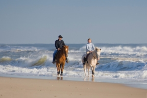 Horseback riding at Island Beach State Park in NJ