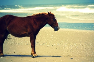 Horseback riding on NJ beaches
