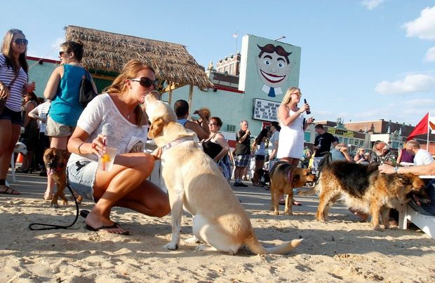 Awesome Things to do with dogs in NJ