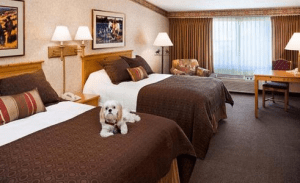 dog_hotels_in_NJ