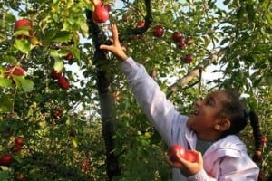 Apple PickingFun  Seasonal Things To Do In NJ