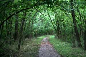 The Best Hiking Trails In New Jersey