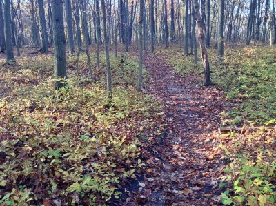 Cheesequake State Park NJ Hiking Trails for Experienced Hikers