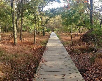 Cheesequake State Park Hiking Trails for Beginners in NJ