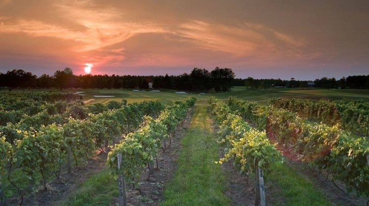 Renault Winery - Definitive Guide to Wine Tasting in NJ