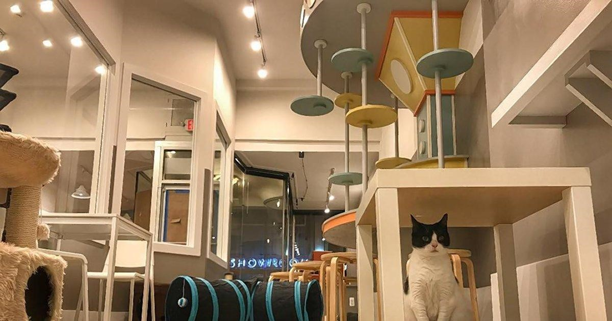 Cat Cafe NJ