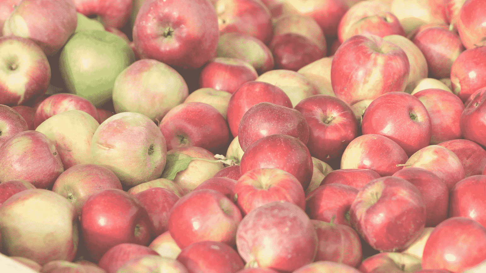 Image of Apples Picked at Terhune Orchards in Princeton NJ