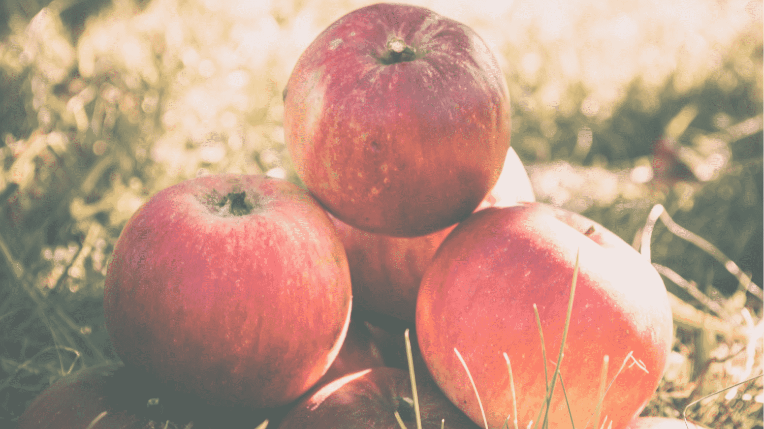 Apple Picking Orchards That Are Great for Families in NJ