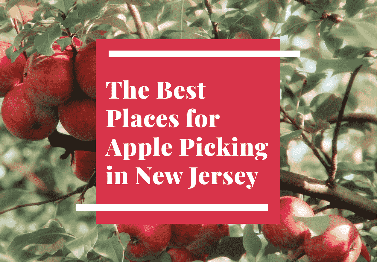 Best Places to Go Apple Picking for Families in NJ