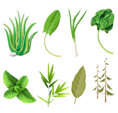 The herbal market offers many exciting opportunities of products to promote