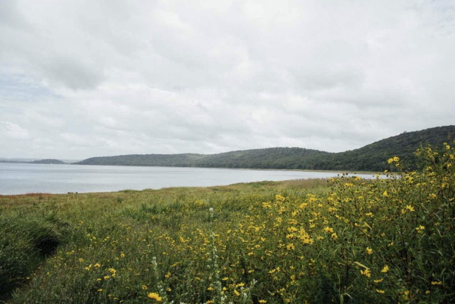 Image showing yellow flowers along the water as seen on the hiking trails at Round Valley Reservoir in NJ