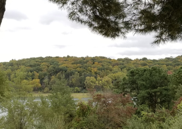 Image of the trees lining the hiking trails at Round Valley Reservoir